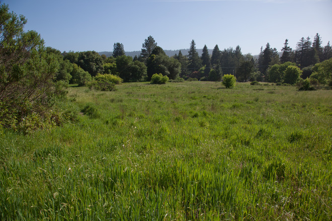 Mount Hermon Meadow