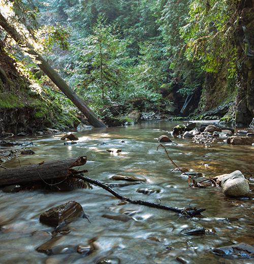Bean Creek. Redwood Camp.