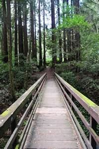 Mount Hermon redwoods bridge