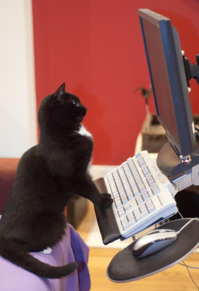 cat at keyboard