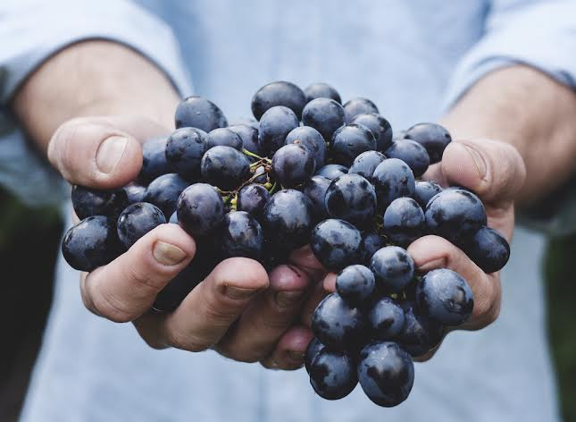 Jan Kern Grapes